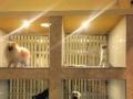 大理酷宠宠物医院
