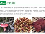 野生红菇一斤多少钱/ /那有批发的?