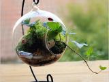 微景观 玻璃吊球 铁艺吊件 苔藓微景观玻璃斜口水培玻璃创意礼品