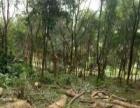 长年专业收树,修树,收道旁树,穿树头,回收木材