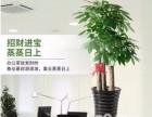 深圳南山鲜花绿植租摆,年花年桔 草坪养护 来电优惠