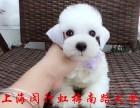 上海狗场直销 品种齐全 纯种健康 多窝选择 可上门或送货上门