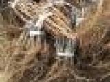 出售占地葡萄苗 贝达苗1-3年苗木 批发占地大葡萄树