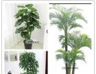 装饰**:仿真植物墙仿真花室内装饰环境布置系列用花