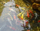 中国 鱼池过滤改造方案