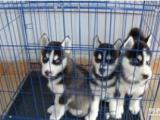 你喜欢狗吗苏州收容中心有流浪狗等待主人的到来