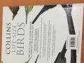 英文鸟类百科书