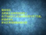 杭州南京苏州宁波购买布偶折耳波斯短毛猫 双飞猫