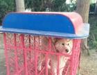 批发订做各种宠物笼,各种尺寸、大小