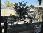 横琴自贸区 香洲埠古典式四合院 300平方古色古香文化华融琴海湾