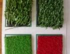 北京塑料草坪厂家