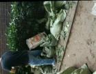 专业绿化养护种植