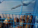 出各种观赏鸟,宠物兔,荷兰猪等等