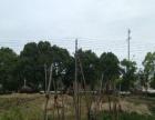 出售麻城土地70平米