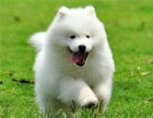 连云港哪里有卖狗的 拉布拉多多少钱 哈士奇的价格