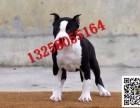 3-4个月左右的斯塔福犬幼犬价格怎么卖的