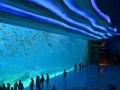 广州、长隆野生动物园、长隆欢乐世界、珠海长隆、水上乐园双飞五日游