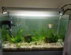 深圳光明新区上门清洗鱼缸,鱼缸回收/出售鱼缸