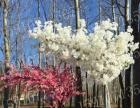 仿真樱花树婚庆装饰道具大型橱窗客厅装饰桃花树腊梅树