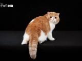 可愛貓咪找新家,多只待售萌寵等你來