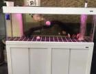 上海鱼缸专卖 观赏鱼专卖