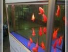 鱼缸清洗 维修 定做 包月养鱼 水族服务 造景