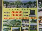 重庆殡葬服务丧事一条龙