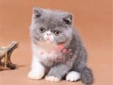 潍坊哪里卖加菲猫最便宜多少钱一只 购买包健康多久
