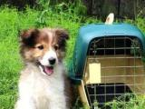 宠物托运选长旺全国宠物托运