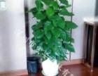 地铁口绿植租摆 植物租摆 花卉租摆 办公室租摆 绿化养护