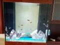 亮点水族生态鱼缸周口专卖