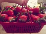 这家草莓园不错,值得大家来采摘
