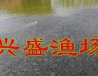供应包头市草鱼、鲤鱼、鲫鱼、青鱼、花鲢、白鲢、观赏鱼