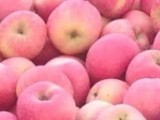 大量供应新鲜水果 优质苹果 红富士苹果批发量大从优【图】