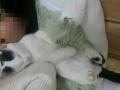 两只猫咪求寄养,爱猫的请进