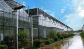 连栋温室造价是多少连栋温室建设