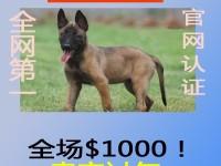 马犬多少钱?哪里买的到正宗马犬?