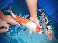 观赏鱼热带鱼鱼缸水族箱促销中