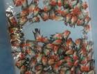热带鱼 龙鱼 鱼缸 鱼池 假山 水族箱