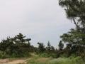 李官仙子峪墓地