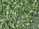 供应水磨石石子 盆栽多肉石子 红石子 绿石子 天然/机制卵石