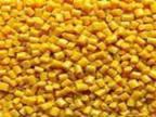 供应 供应 PPPE黄瓶再生塑料