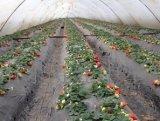 鑫联岳塑料制品供应同行中质量好的草莓膜-山东草莓膜