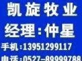 2011年7月10日江苏太湖母猪场选凯旋