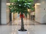 上海绿植花卉绿植租摆办公室植物租赁开业乔迁鲜花花篮