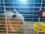 魔王金花松鼠荷兰猪兔子仓鼠龙猫乌龟鹦鹉蜗牛八哥鹩哥