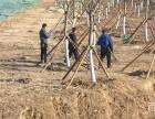 北京厂家批发竹竿 木杆 竹片 竹跳板 竹梯子等