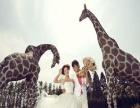 洛可可婚纱摄影 洛可可婚纱摄影加盟招商