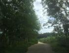 海南省琼海市土地转让 土地 73亩坡地