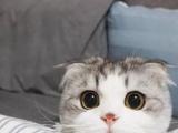 河源专门繁殖布偶猫咪的猫舍电话